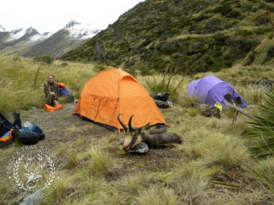 Track n Trail Safaris-New Zealand-Chamois (36)