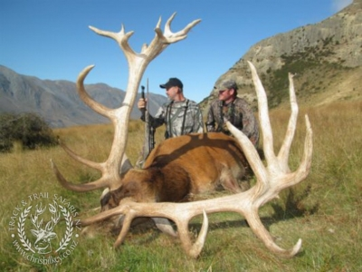 Track n Trail Safaris-New Zealand-exceptional red stag (23)