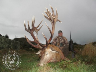 Track n Trail Safaris-New Zealand-exceptional red stag (24)