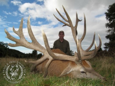 Track n Trail Safaris-New Zealand-exceptional red stag (29)