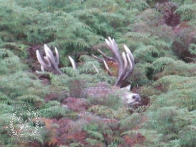 Track n Trail Safaris-New Zealand-exceptional red stag (7)