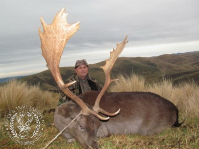 Track n Trail Safaris-New Zealand-fallow (5)