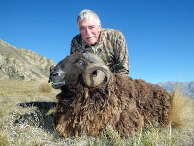 Track n Trail Safaris-New Zealand-ram goat (1)