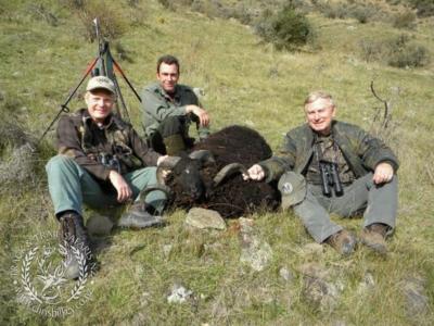 Track n Trail Safaris-New Zealand-ram goat (11)