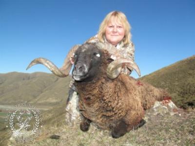 Track n Trail Safaris-New Zealand-ram goat (12)