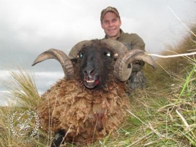 Track n Trail Safaris-New Zealand-ram goat (13)