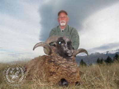 Track n Trail Safaris-New Zealand-ram goat (15)