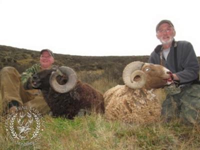 Track n Trail Safaris-New Zealand-ram goat (18)