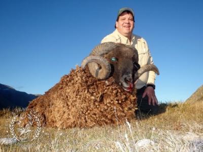 Track n Trail Safaris-New Zealand-ram goat (2)