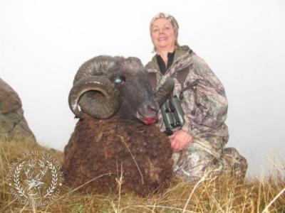 Track n Trail Safaris-New Zealand-ram goat (20)