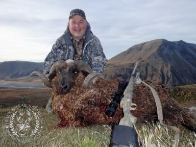 Track n Trail Safaris-New Zealand-ram goat (3)