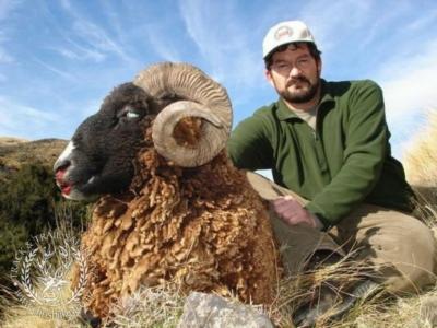 Track n Trail Safaris-New Zealand-ram goat (31)