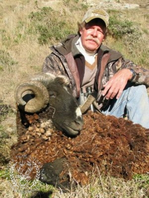 Track n Trail Safaris-New Zealand-ram goat (34)