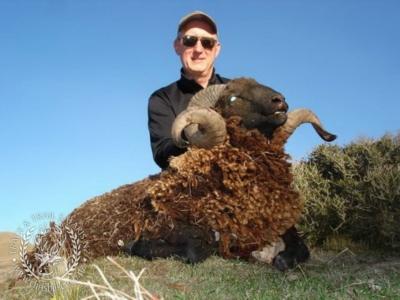 Track n Trail Safaris-New Zealand-ram goat (35)