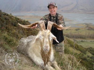 Track n Trail Safaris-New Zealand-ram goat (37)