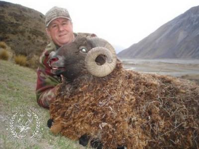 Track n Trail Safaris-New Zealand-ram goat (38)