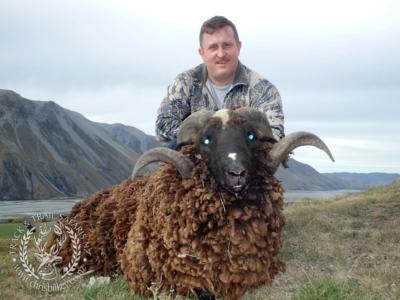 Track n Trail Safaris-New Zealand-ram goat (4)