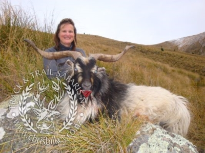 Track n Trail Safaris-New Zealand-ram goat (40)