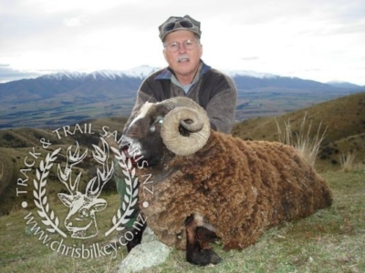 Track n Trail Safaris-New Zealand-ram goat (42)
