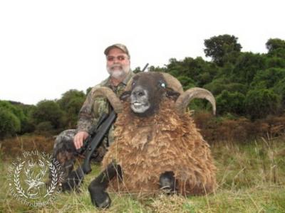 Track n Trail Safaris-New Zealand-ram goat (6)