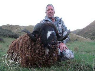 Track n Trail Safaris-New Zealand-ram goat (8)