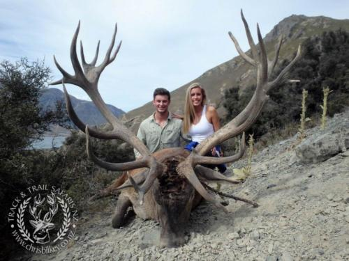 Track n Trail Safaris-New Zealand-red stag (11)