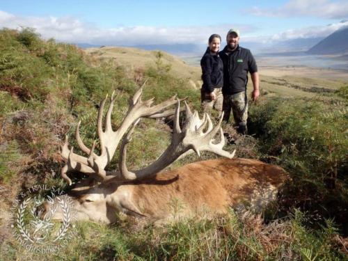 Track n Trail Safaris-New Zealand-red stag (18)