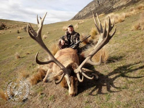 Track n Trail Safaris-New Zealand-red stag (23)