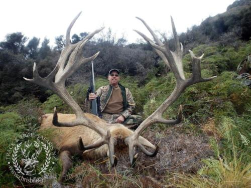 Track n Trail Safaris-New Zealand-red stag (27)