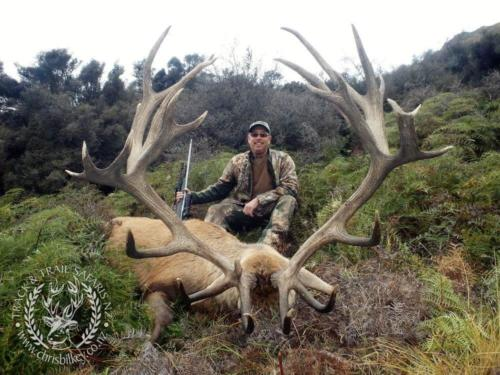 Track n Trail Safaris-New Zealand-red stag (28)