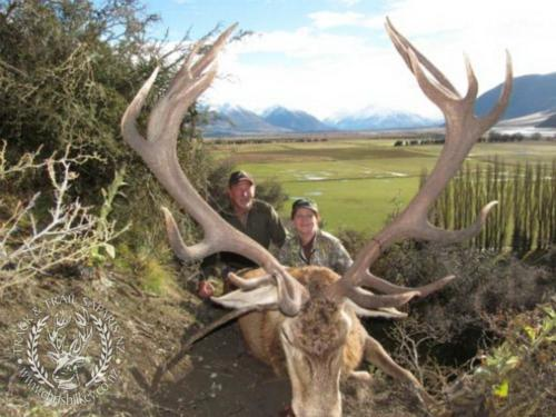 Track n Trail Safaris-New Zealand-red stag (35)