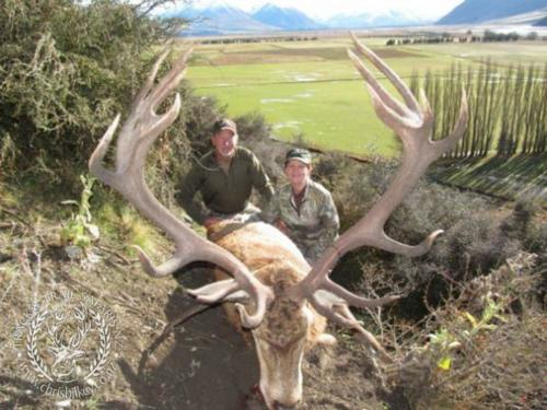 Track n Trail Safaris-New Zealand-red stag (40)