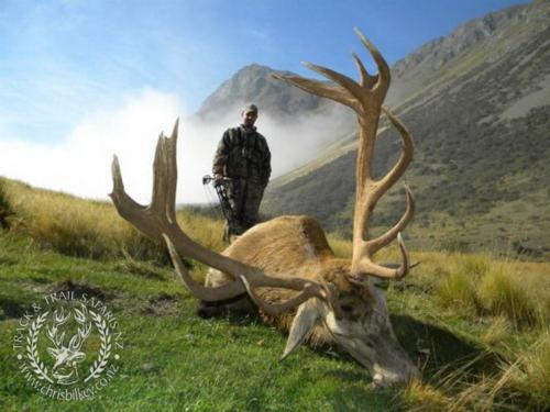 Track n Trail Safaris-New Zealand-red stag (48)