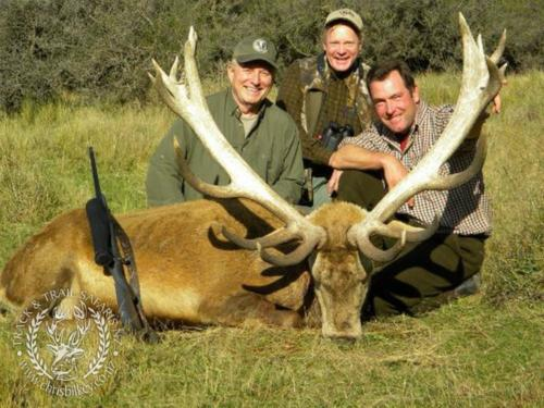 Track n Trail Safaris-New Zealand-red stag (49)
