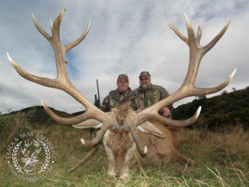 Track n Trail Safaris-New Zealand-red stag (51)