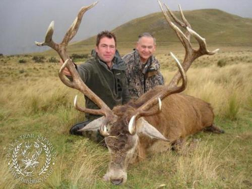 Track n Trail Safaris-New Zealand-red stag (59)