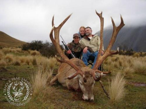 Track n Trail Safaris-New Zealand-red stag (67)