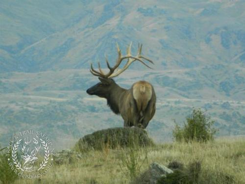 Track n Trail Safaris-New Zealand-Elk Rusa Samba white tail (22)