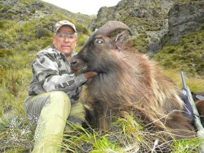 Track n Trail Safaris-New Zealand-Tahr (13) (1)