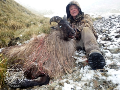 Track n Trail Safaris-New Zealand-Tahr (28) (1)
