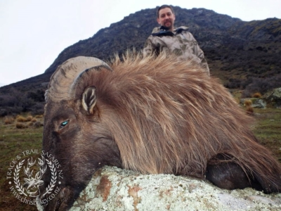 Track n Trail Safaris-New Zealand-Tahr (29) (1)