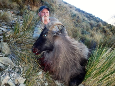Track n Trail Safaris-New Zealand-Tahr (33) (1)