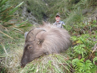 Track n Trail Safaris-New Zealand-Tahr (48) (1)