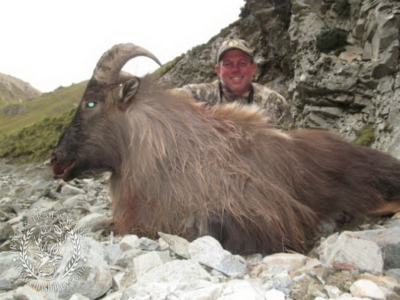Track n Trail Safaris-New Zealand-Tahr (50) (1)