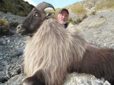 Track n Trail Safaris-New Zealand-Tahr (52) (1)