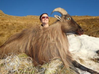 Track n Trail Safaris-New Zealand-Tahr (60) (1)