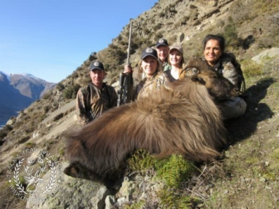 Track n Trail Safaris-New Zealand-Tahr (63) (1)